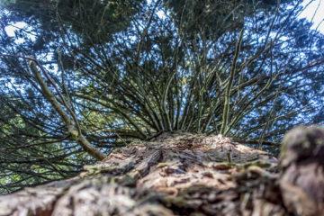 5 Geheimnisse rund um den Waadtländer Jura