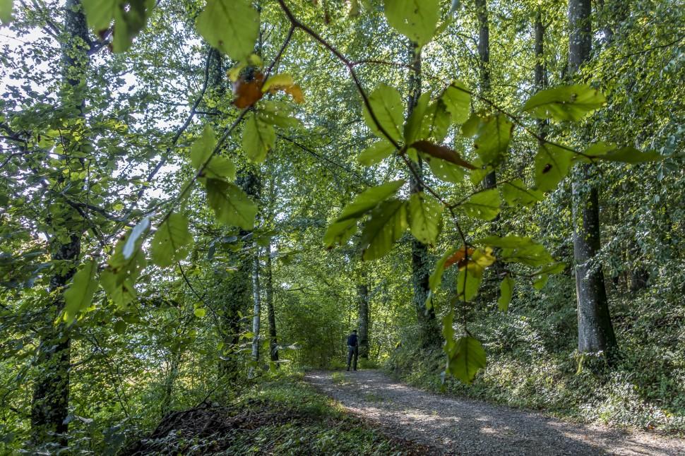 Arboretum-aubonne-7