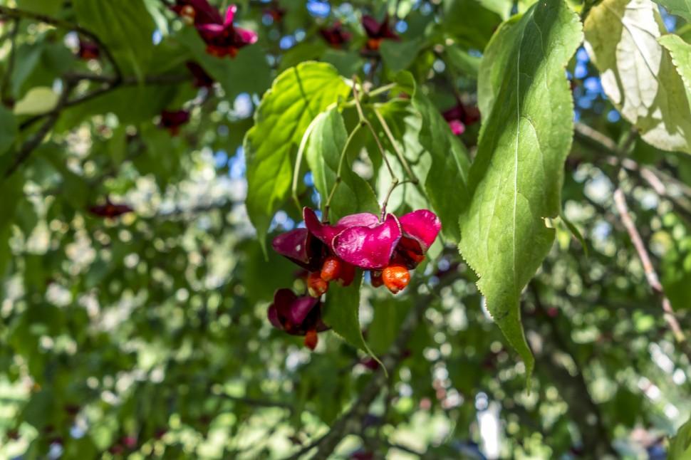 Arboretum-aubonne-9