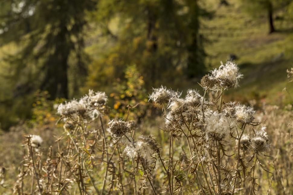 Herbst-Engadin