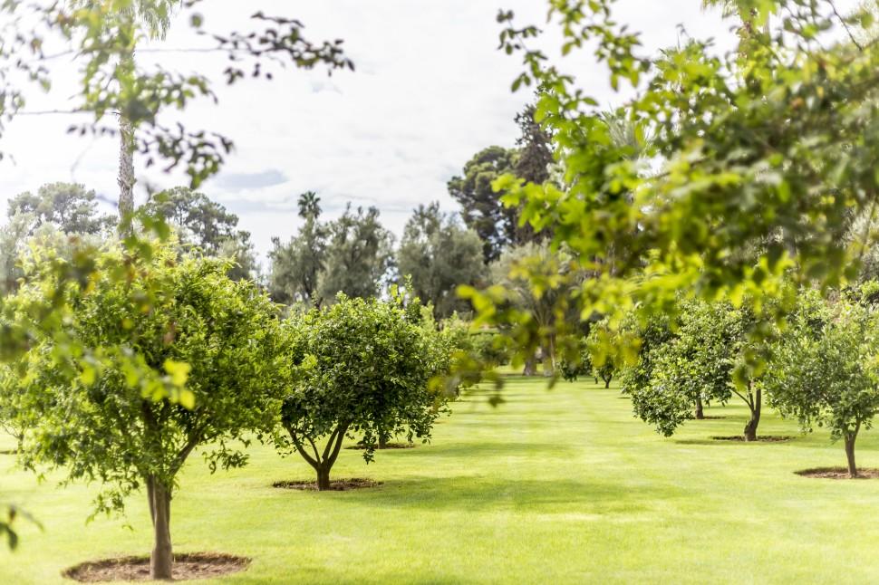 la-mamounia-garden-3