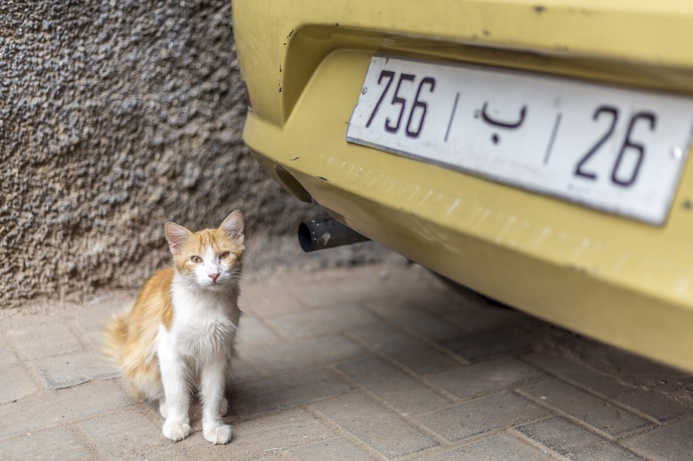 marrakech-taxi-cat