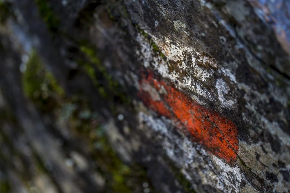 Flimserwald-Detail-4
