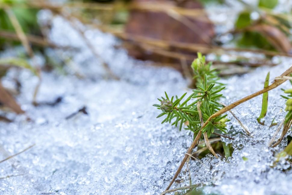 Flimserwald-Schnee