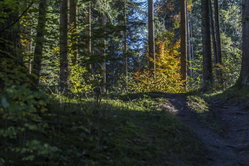 Flimserwald-wandern