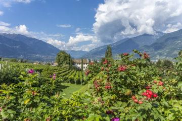 Ein Potpourri durch Südtirol