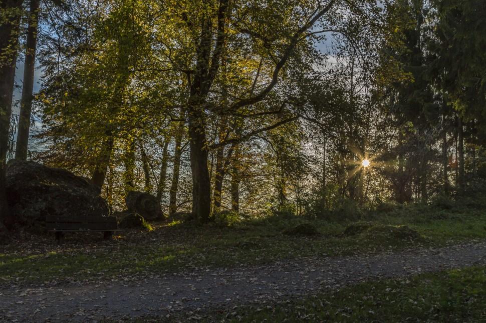 Herbstimmung Morgen
