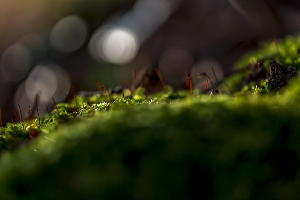 makro Waldboden