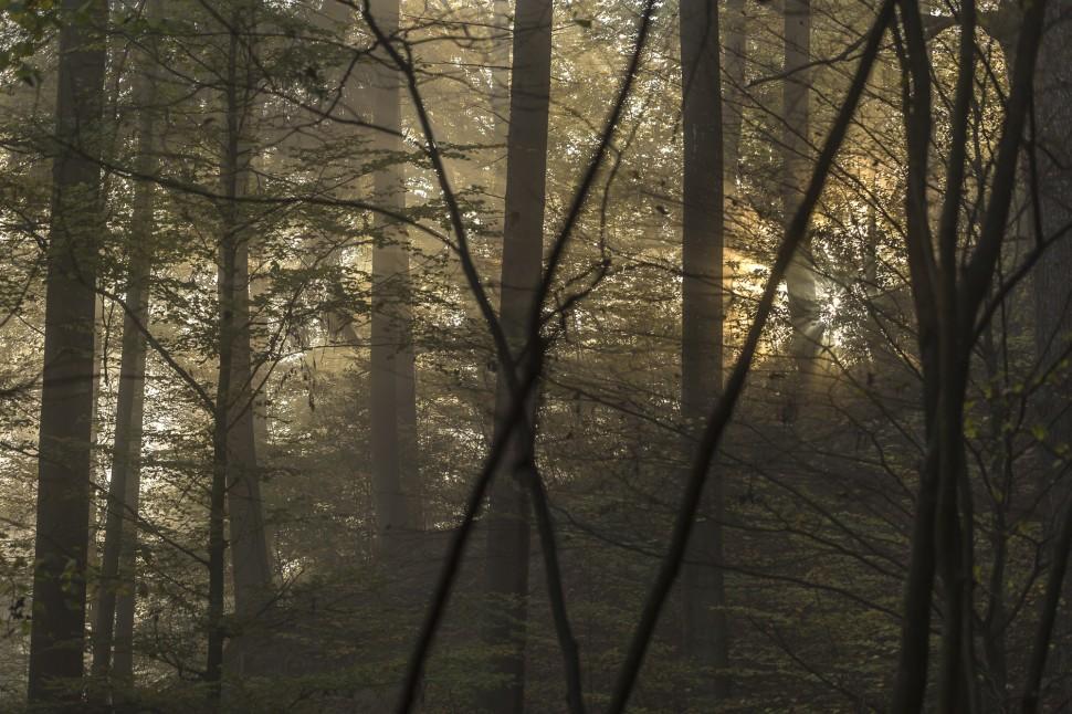 Nebelstimmung Herbst