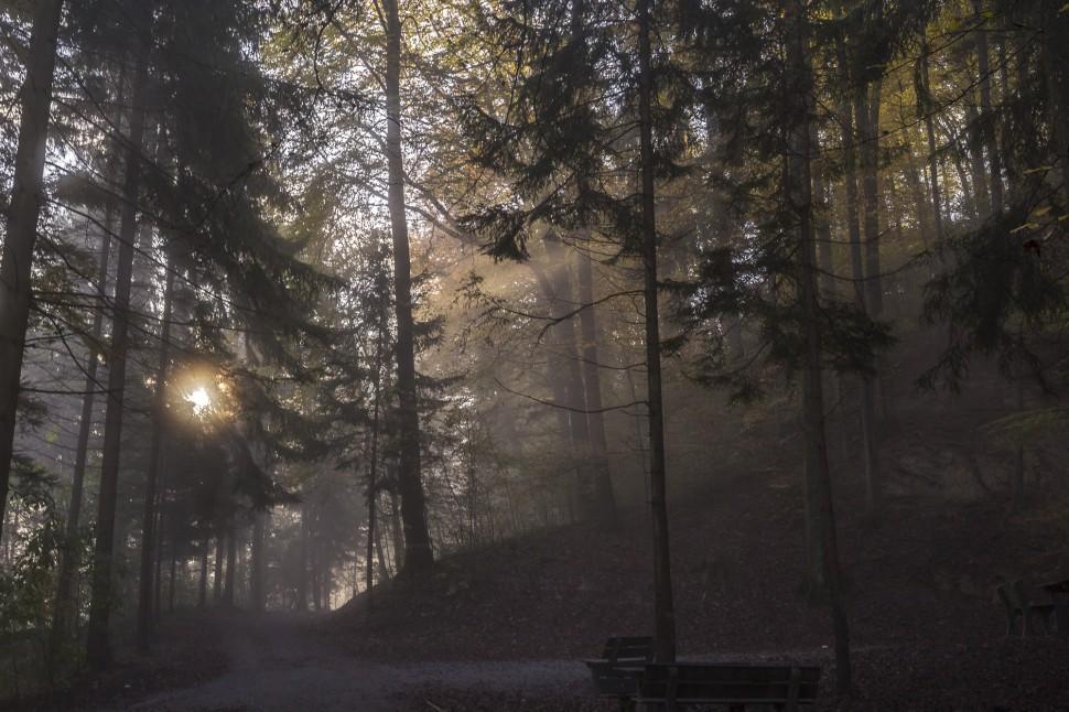 Zuerich Herbstwald
