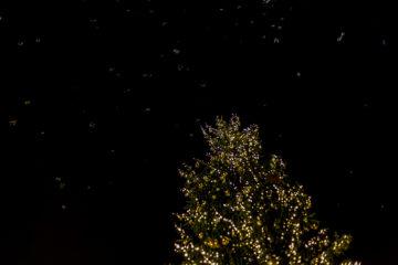 Adventstipp - Weihnachtsmarkt Basel