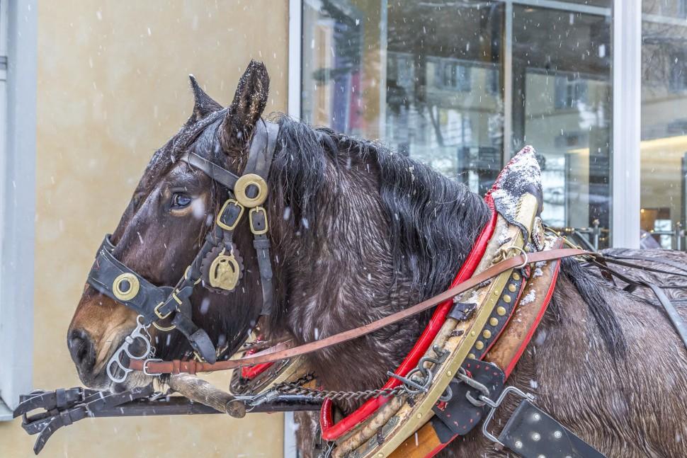 Pontresina-Pferdeschlitten