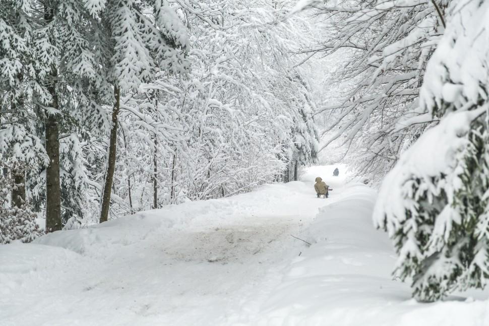 Uetliberg-Schlittelweg