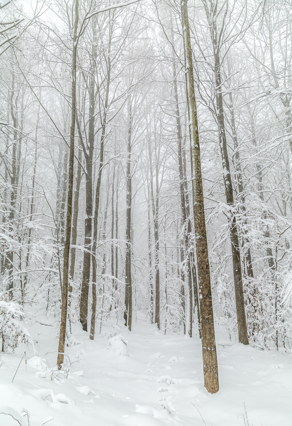 Wald-Schnee