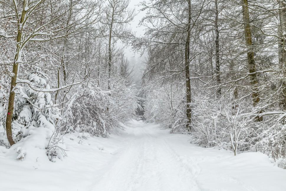Winterlandschaft-Zürich