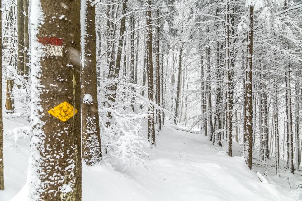 Winterwandern-Uetliberg