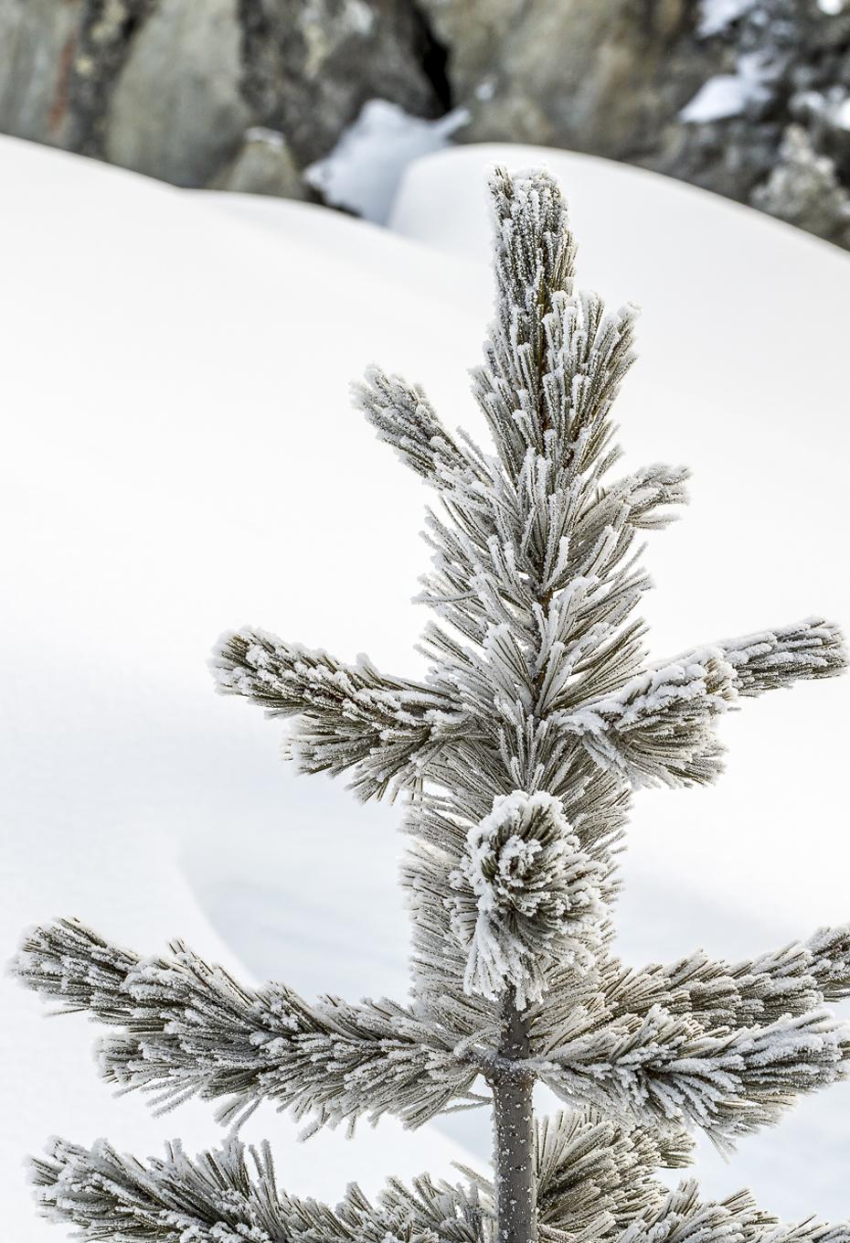 Arve-Winter
