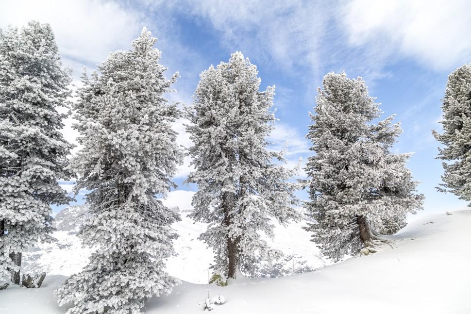 Baeume-Winter