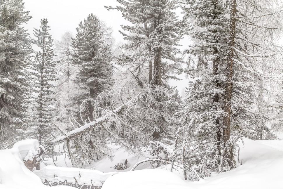 Natur-Winter