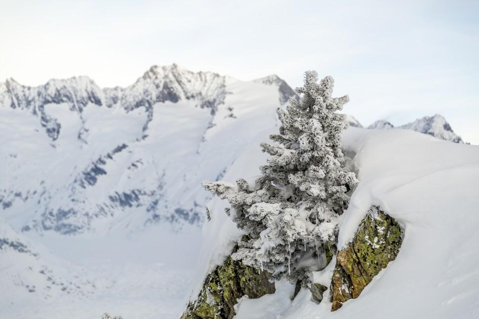 Riederalp-Winter