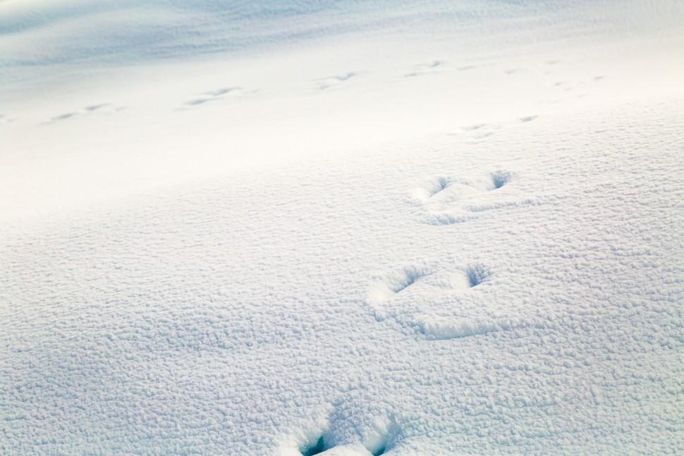 Tierspuren-im-Schnee