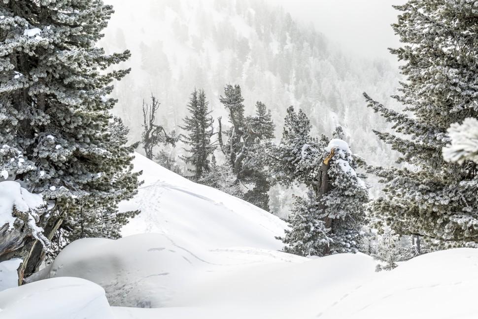 Winter-Riederalp-Natur-1