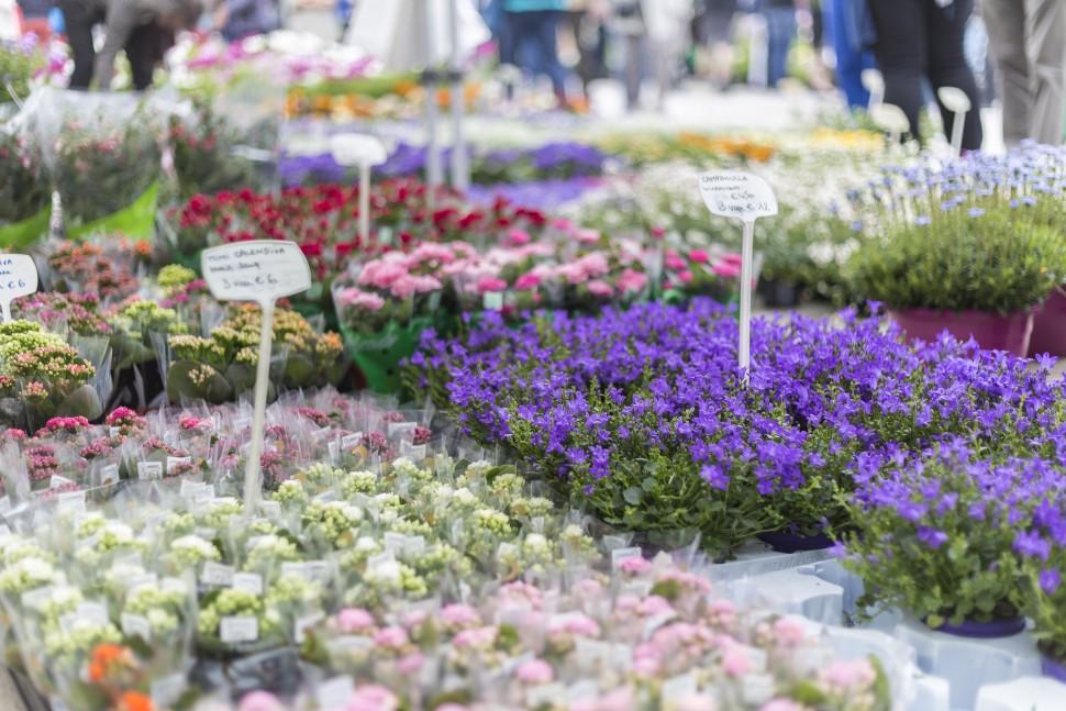 Gent-Blumenmarkt-Kouter-7