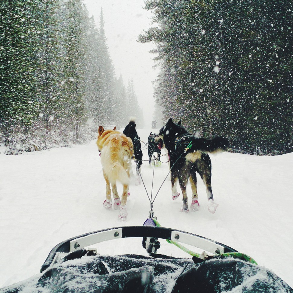 Sled-Dog-Tour-Canmore