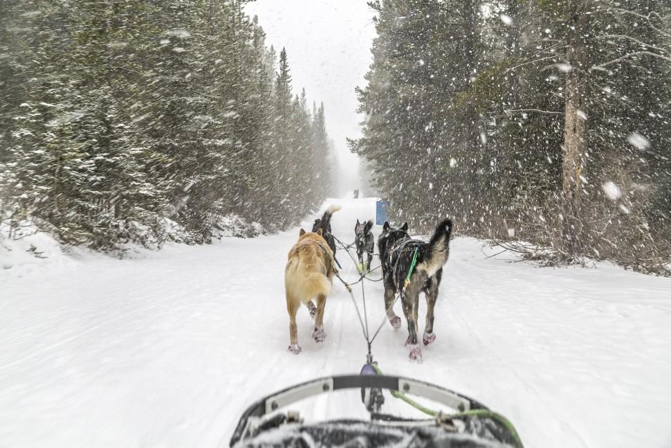 Dog Sledding in Spray Valley, Alberta Canada