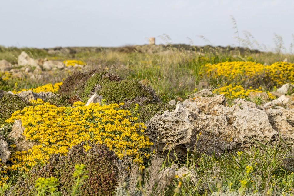 Camí-de-Cavalls-Menorca