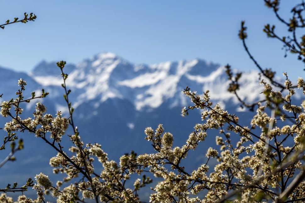 Mals-Frühling
