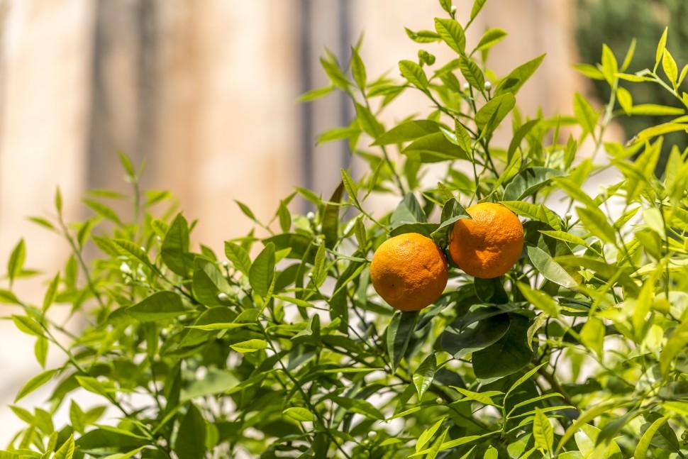 Orangen-Balearen