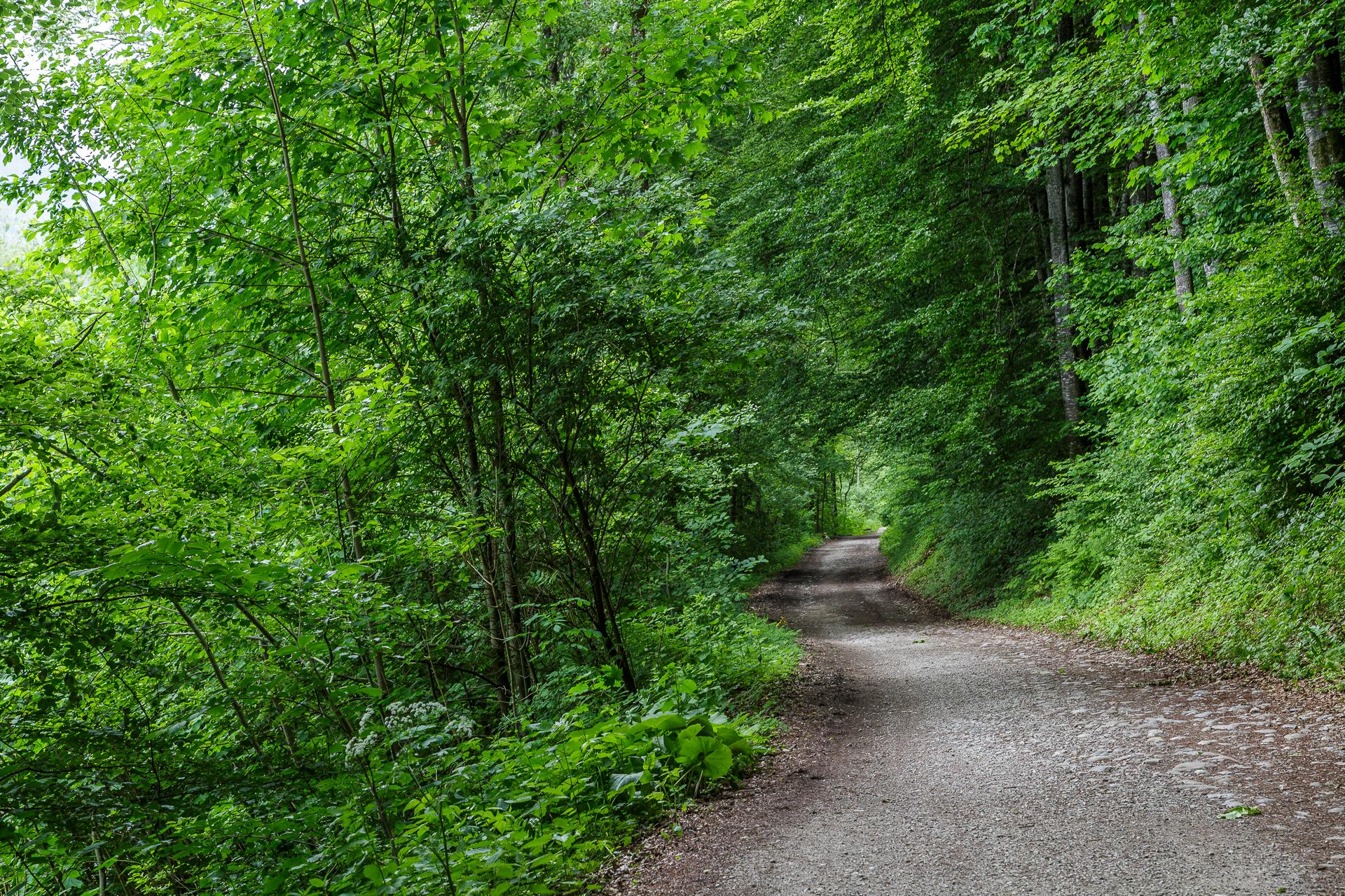 Wald-Broc