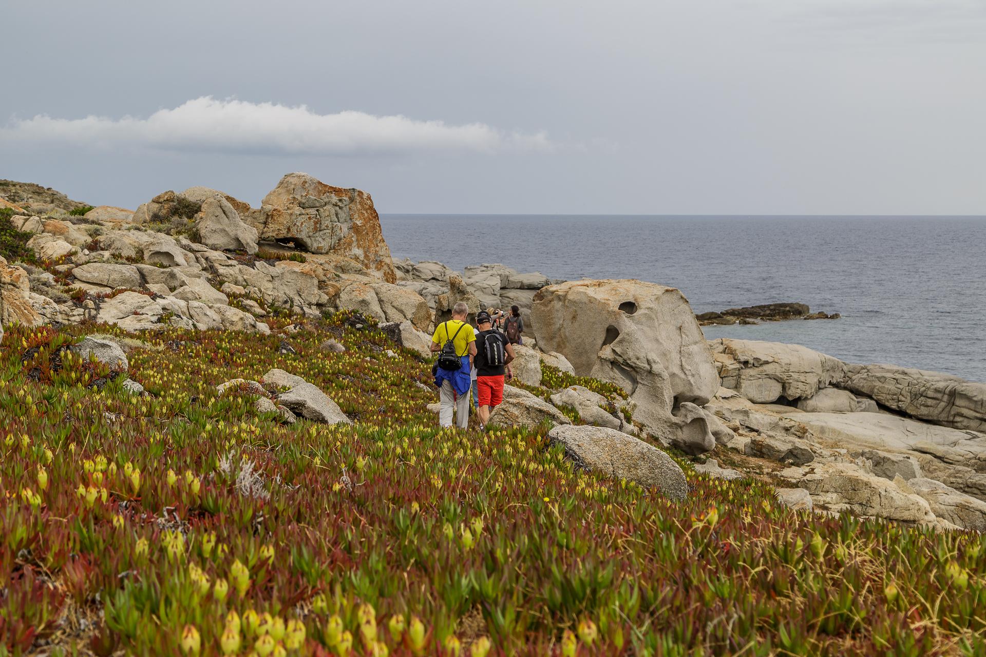 Kuestenwanderung-Korsika-calvi-1