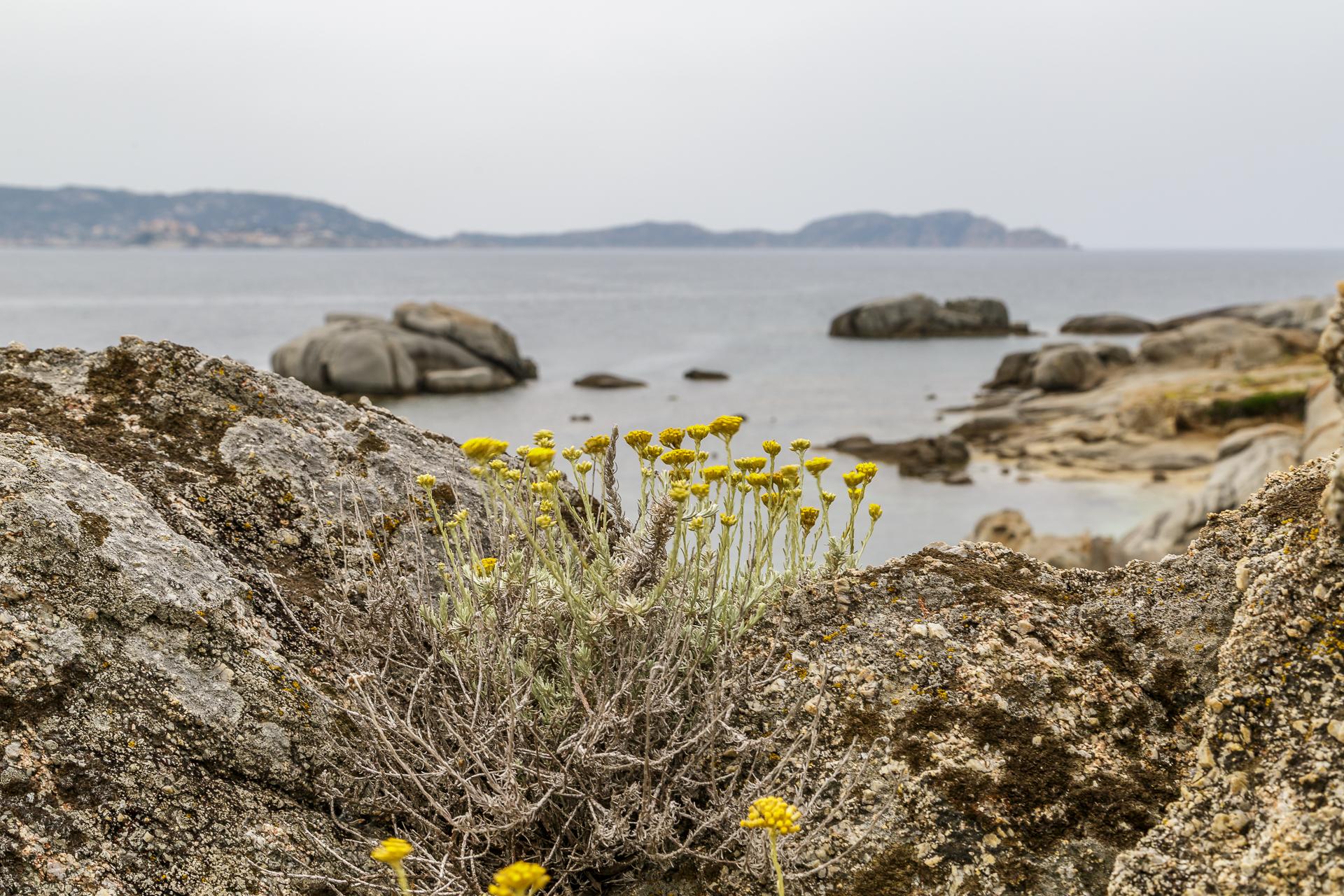 Natur-Korsika