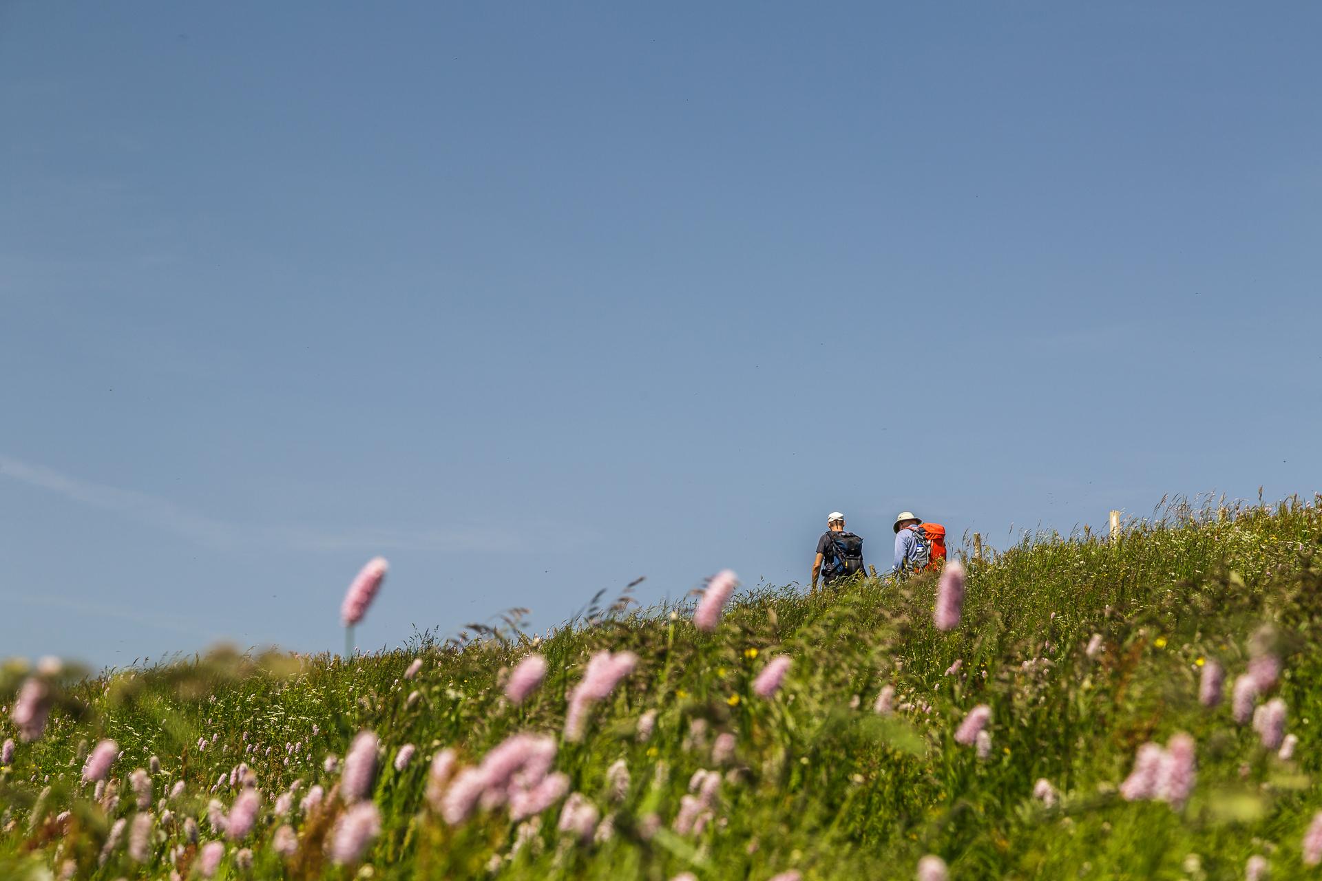 Alpenblumen-Wandern