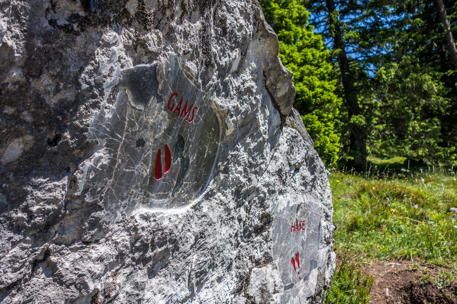 Naturspruengeweg-tierspuren