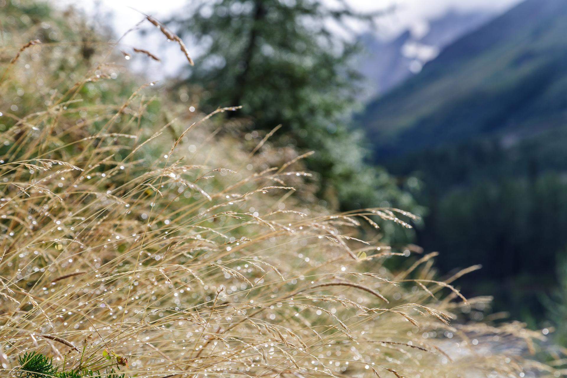 Tautropfen-Natur
