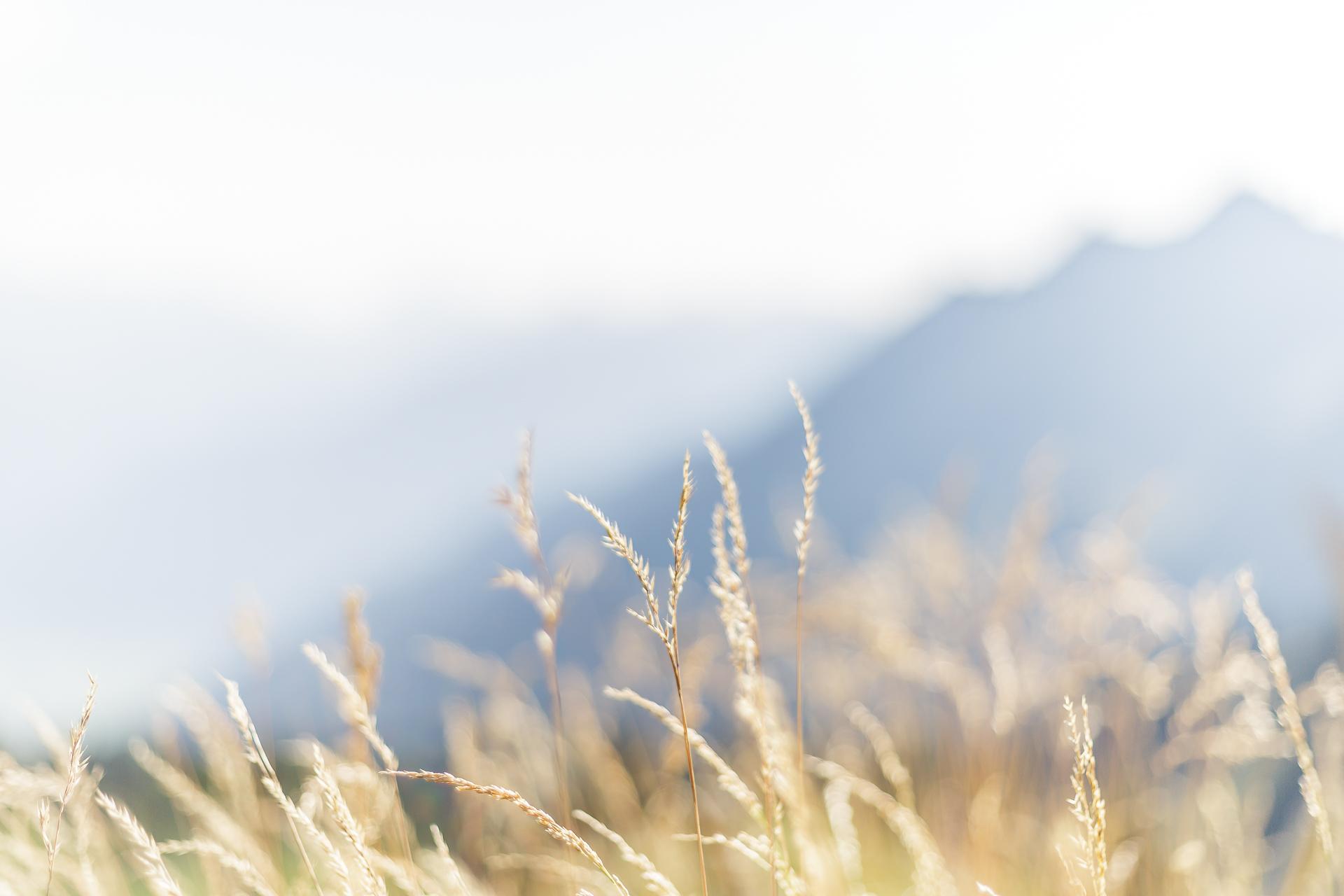Alp-Oberchaeseren-Sommer