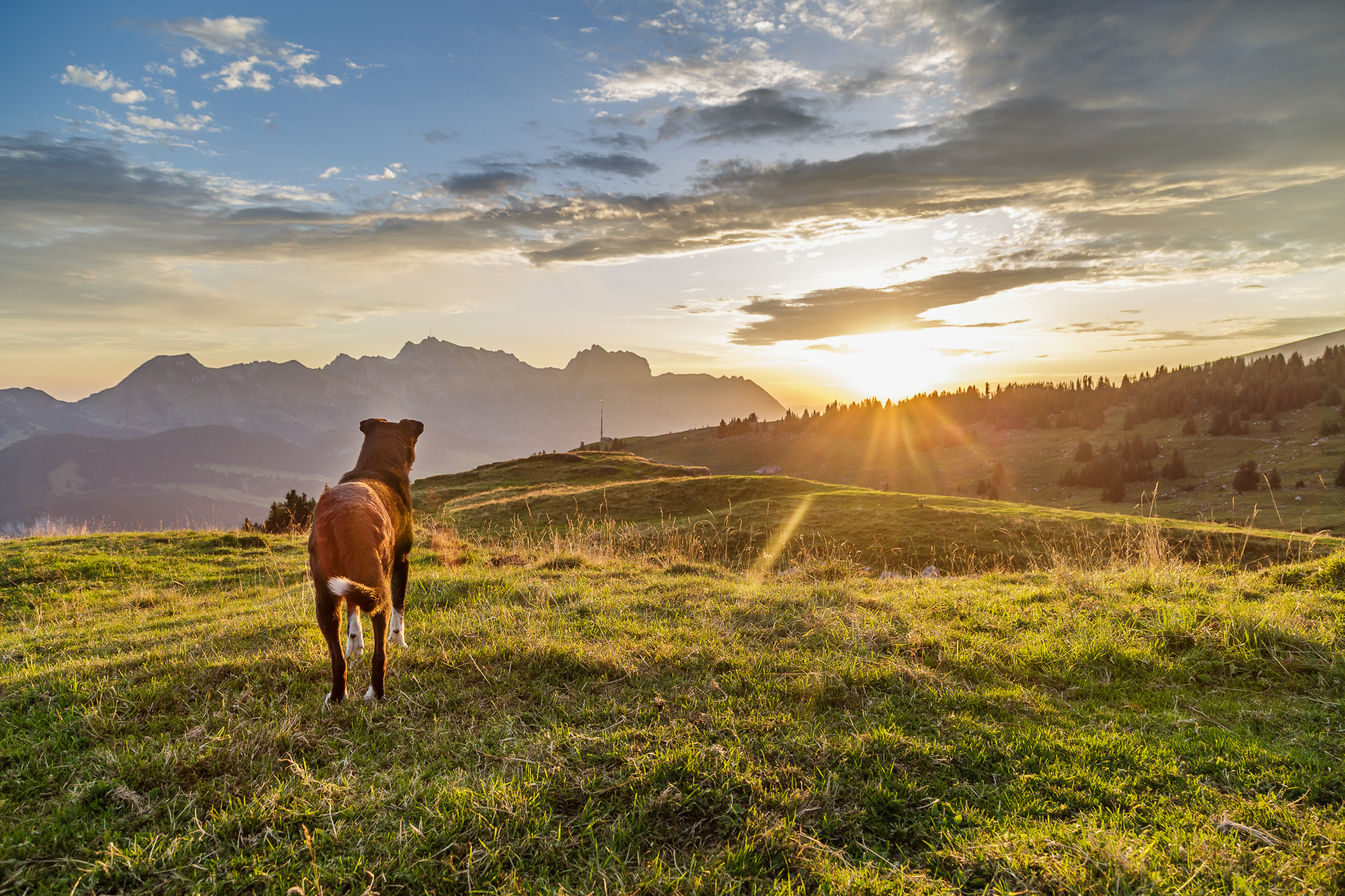 Morgenstimmung-vordere-Selunalp-Hund