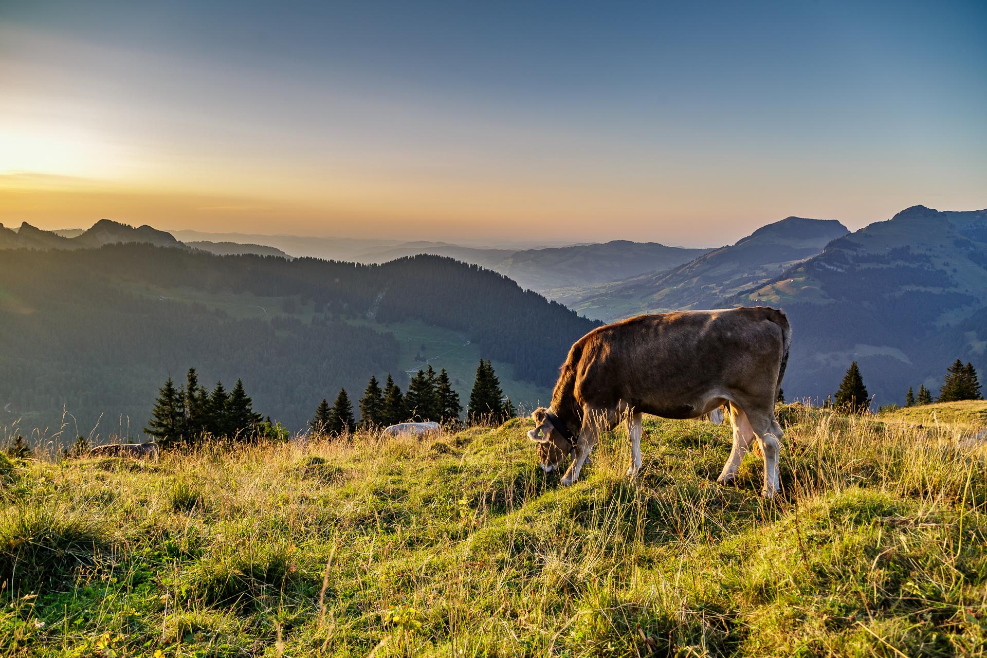 Vordere-Selunalp-Toggenburg-zAlp