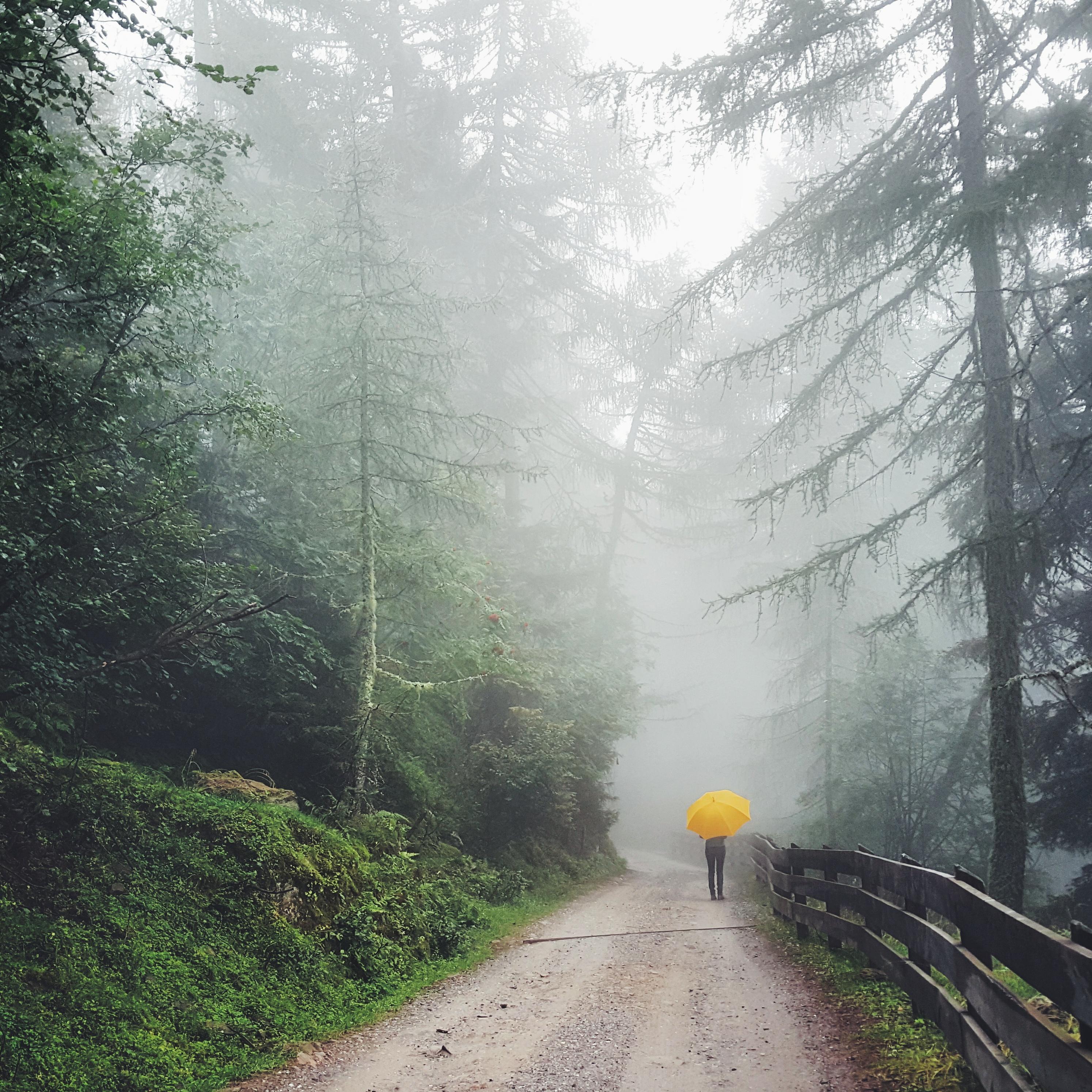 Chasing_fog