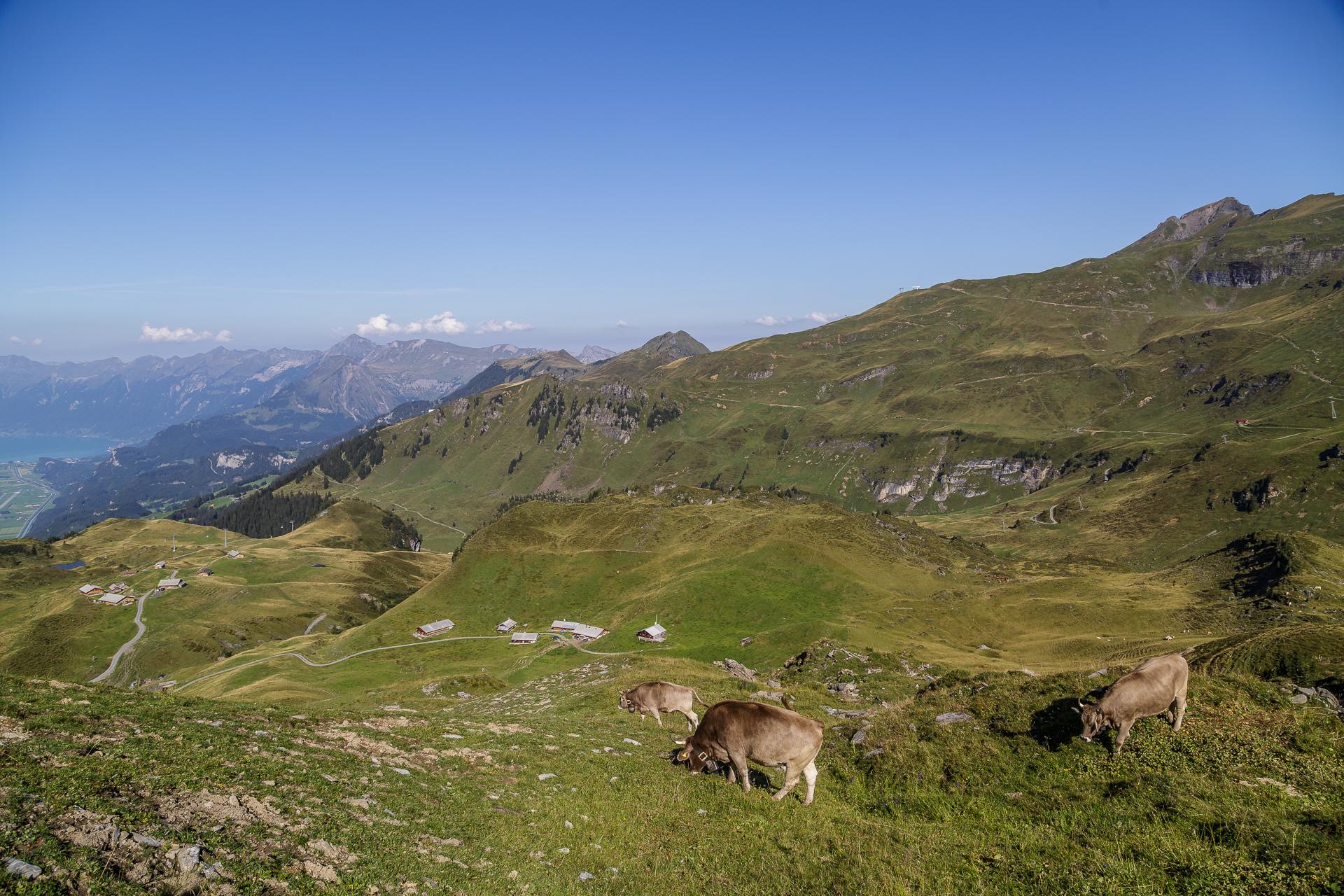 Maegisalp-Panorama