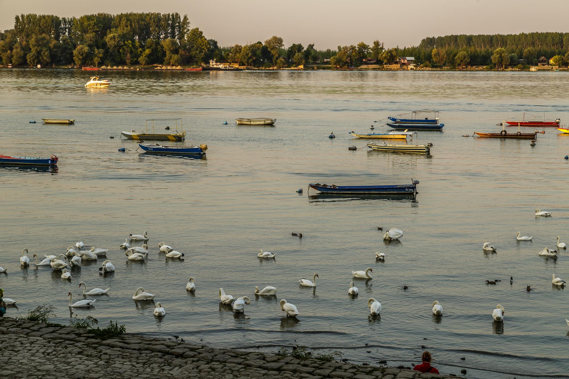 Zemun-Donau
