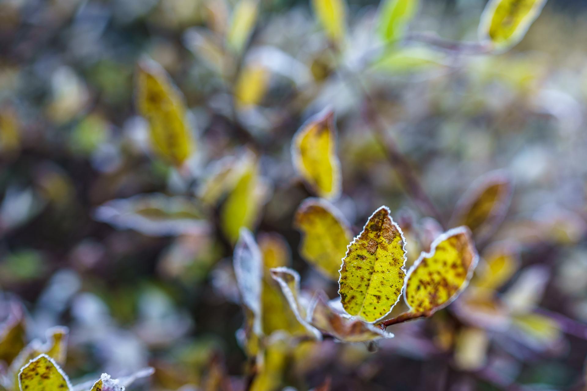 Herbststimmung-Alpen