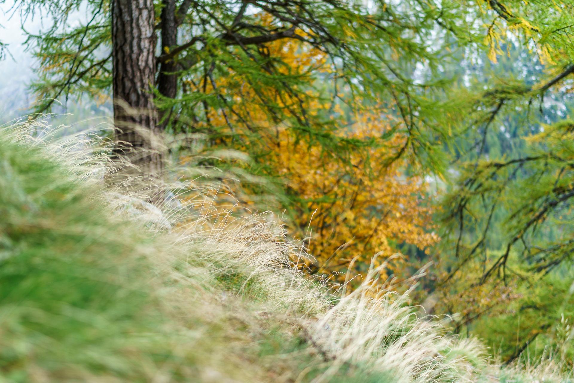 Laerchenwald-Herbst-2