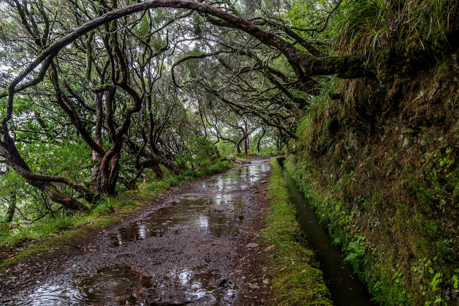 Madeira-Laurisilva-Levada-Wanderung-1