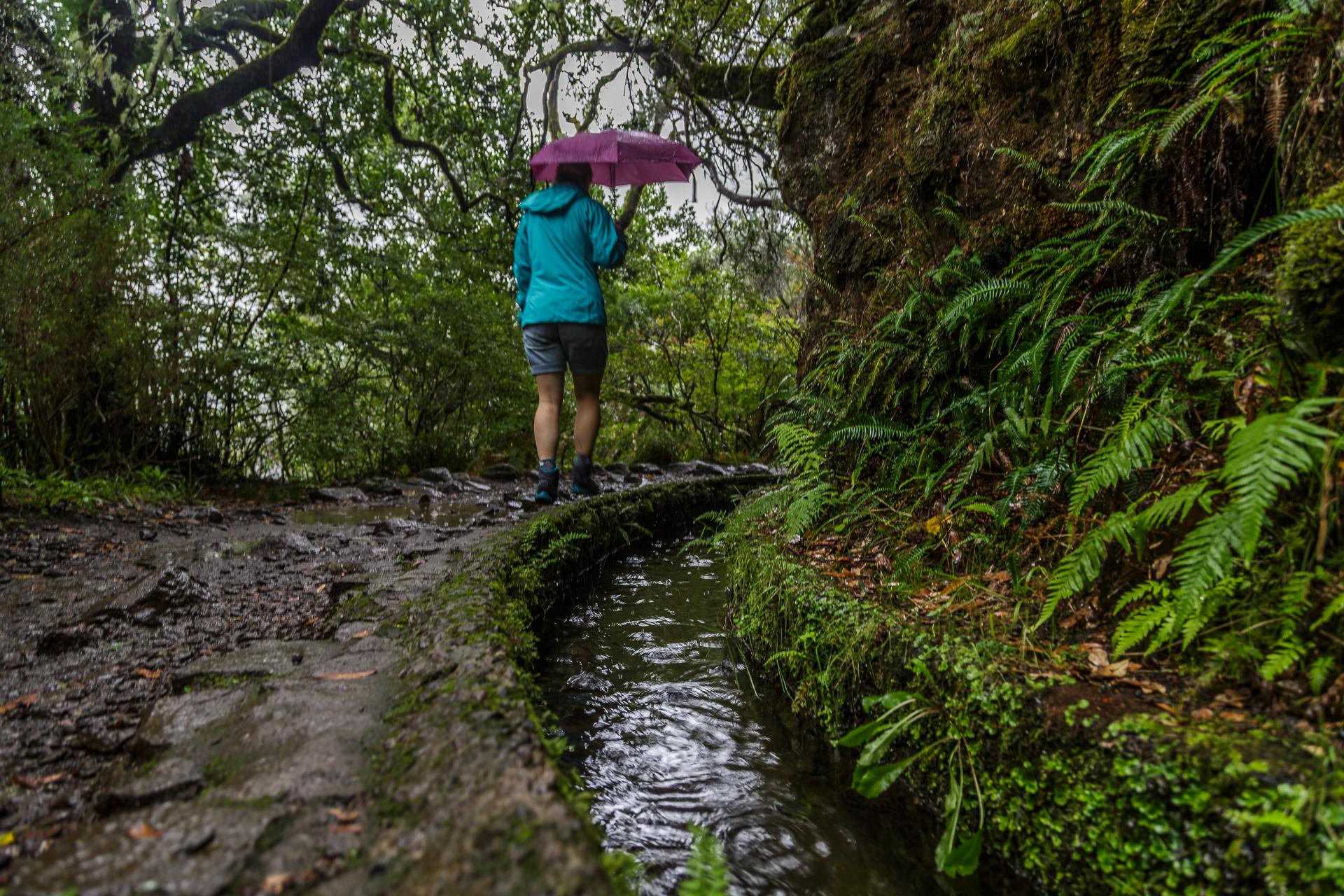 Madeira-Laurisilva-Levada-Wanderung-2