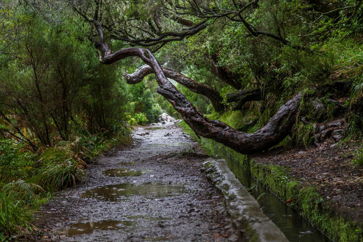 Wandern und Wundern auf Madeira