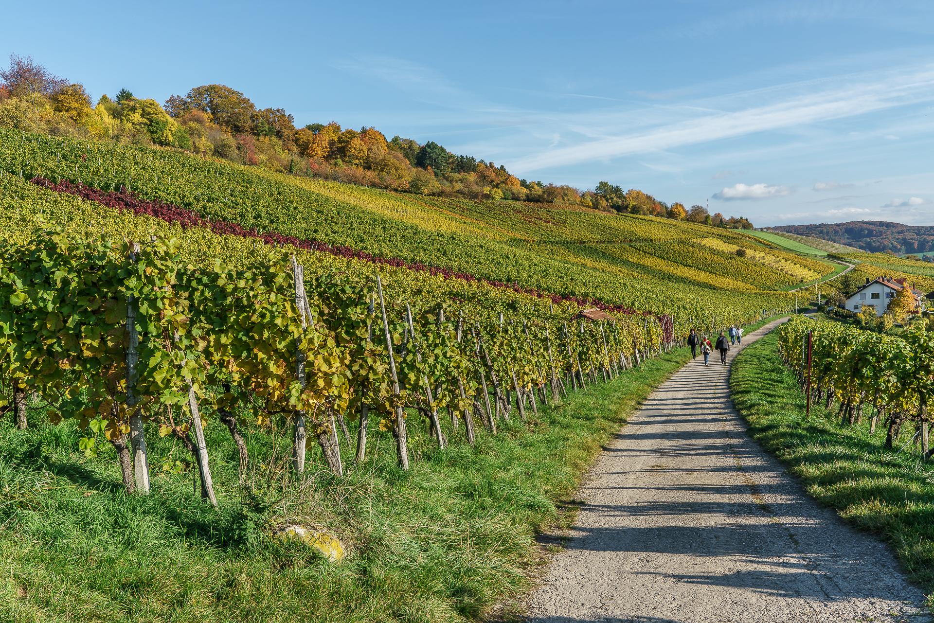 Rehberger-Weg
